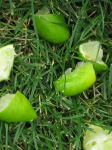 limes in the yard